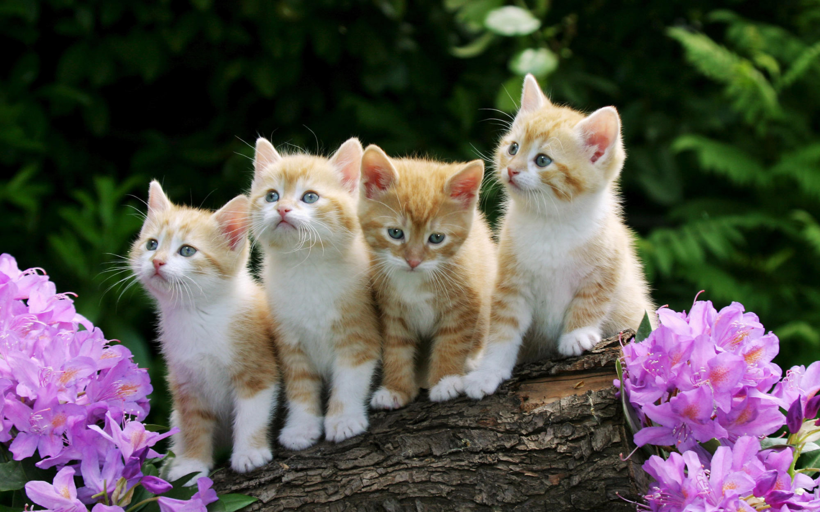 Free Download Cute Baby Cats Wallpaper 2000x1333 For Your Desktop Mobile Tablet Explore 48 Baby Kitten Wallpapers Cute Kittens Wallpapers Free Kittens Wallpaper For Desktop Cute Kitten Wallpapers For Desktop