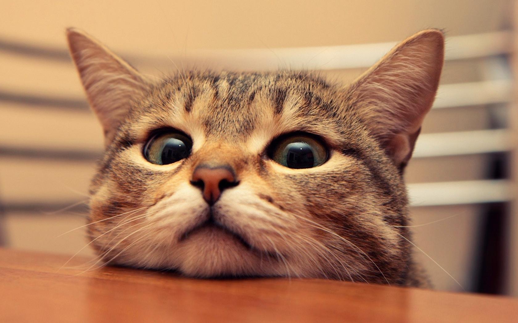 Free Download Cute Wallpapers Cat Wallpaper 1920x1080 1920x1080 For Your Desktop Mobile Tablet Explore 48 Kawaii Cat Wallpaper Cute Black Cat Wallpaper Cats Wallpaper Free For 2013 Kawaii Wallpaper Hd