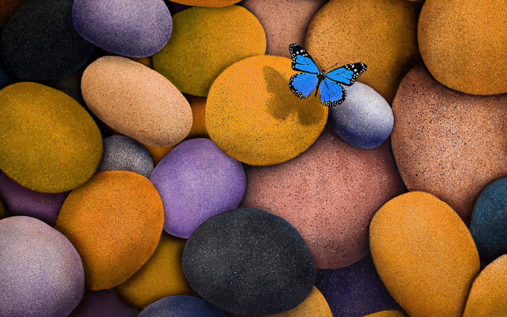 Free Download 3d Wallpaper Hd For Laptop Pretty Butterfly Pictures