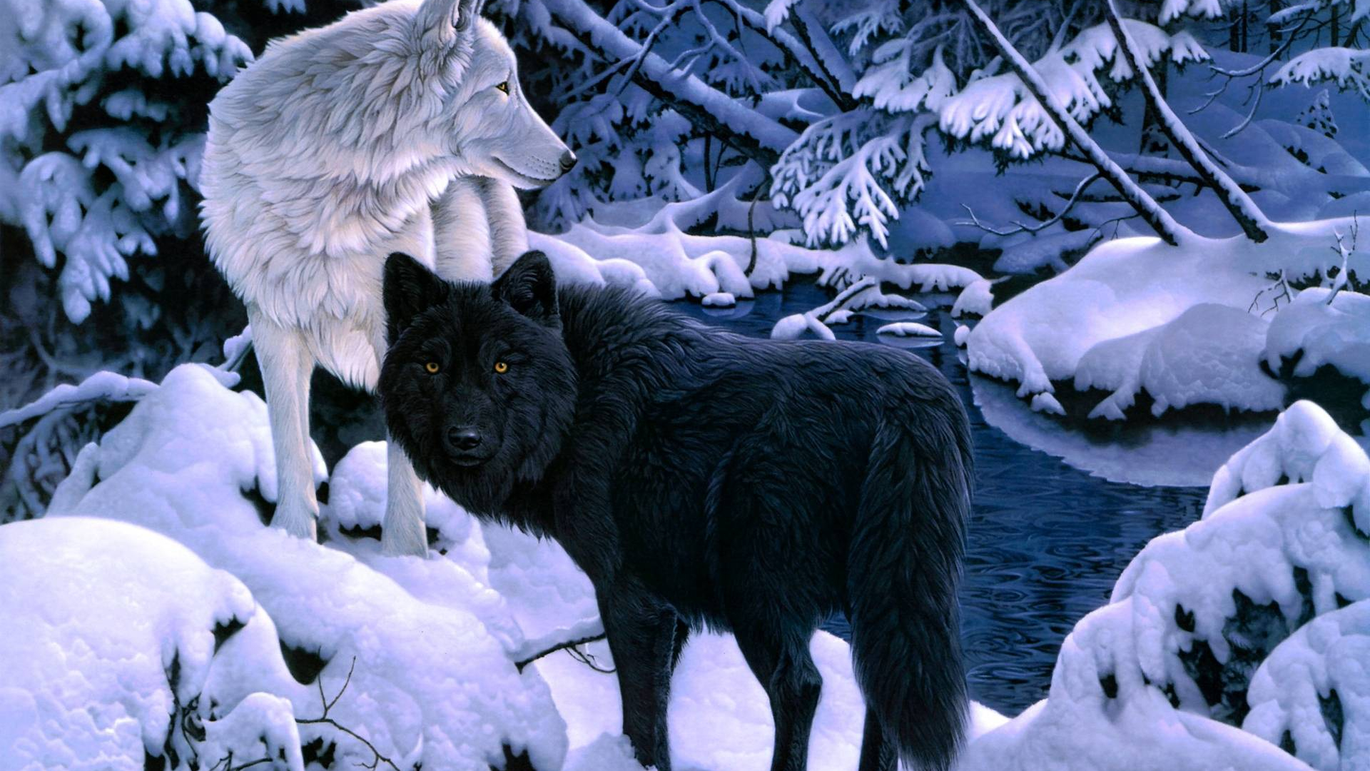 Free Download Black And White Wolf Wallpapers White And Black 1920x1200 For Your Desktop Mobile Tablet Explore 44 Black Wolves Wallpaper Wolf Wallpapers And Screensavers Images Of Wolves For