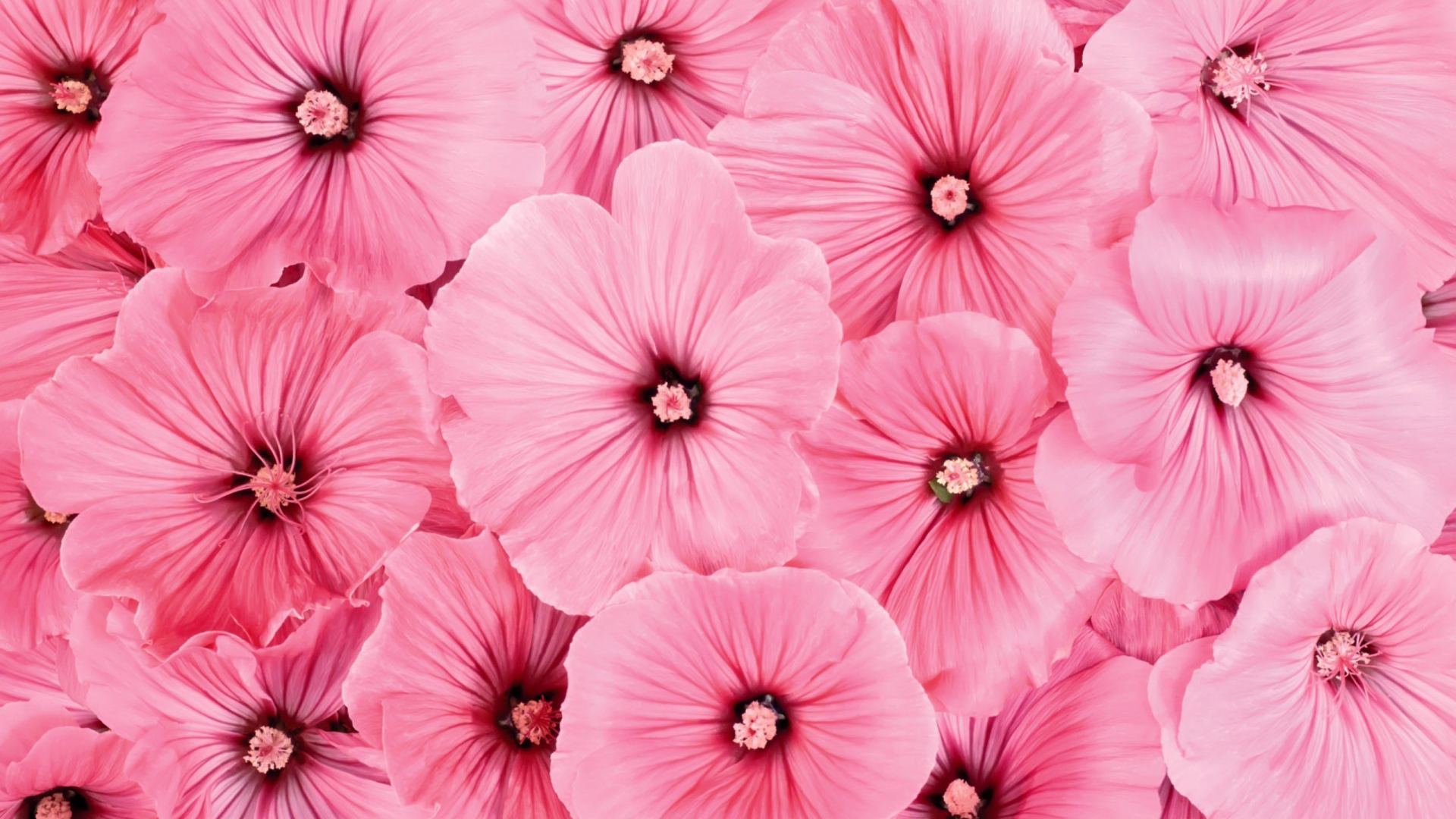 Free Download Pretty Flowers Backgrounds Tumblr Wallpaper