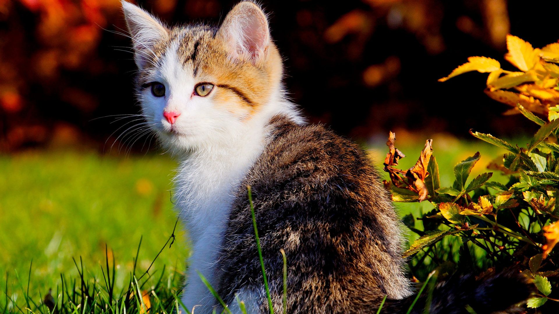 Free Download Cute Cats Beautiful Wallpapers Hd Wallpaper 2286x1377 For Your Desktop Mobile Tablet Explore 49 Cute Cats Wallpapers Free Download Cute Cat Wallpapers Cute Kittens Wallpapers For Desktops
