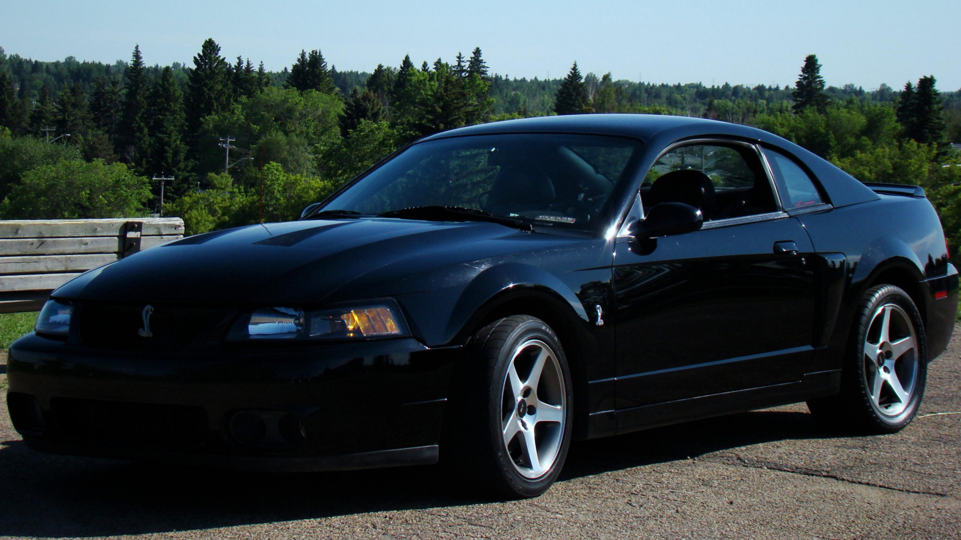 Ford Mustang Forum >> Free Download 2003 Mustang Cobra Pictures Are Up Ford