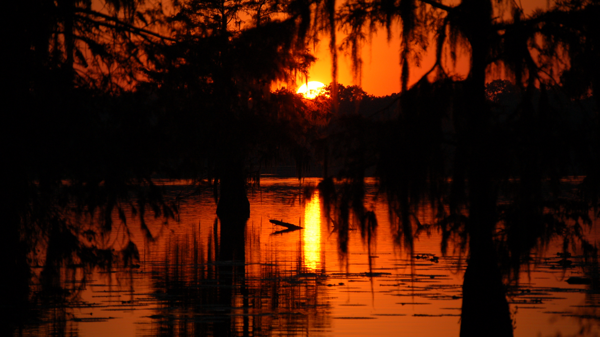 Free Download Description Swamp Sunset In Cajun Countryjpg 3008x2000 For Your Desktop Mobile Tablet Explore 47 Louisiana Swamp Scene Wallpaper Louisiana Swamp Scene Wallpaper Louisiana Swamp Wallpaper Swamp Wallpaper