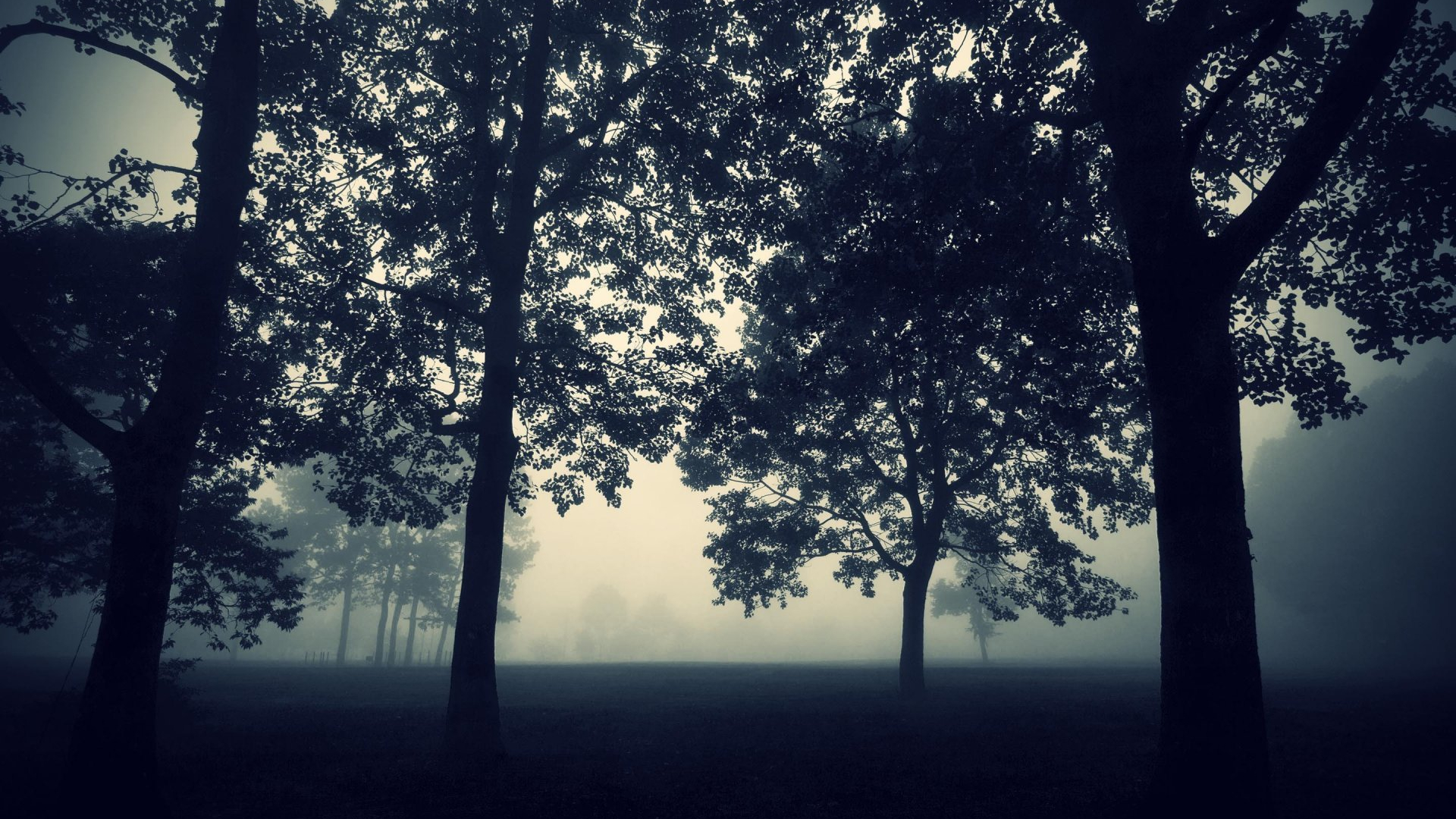 Free Download Tree Fog Darkness Night Twilight Nature Mysticism