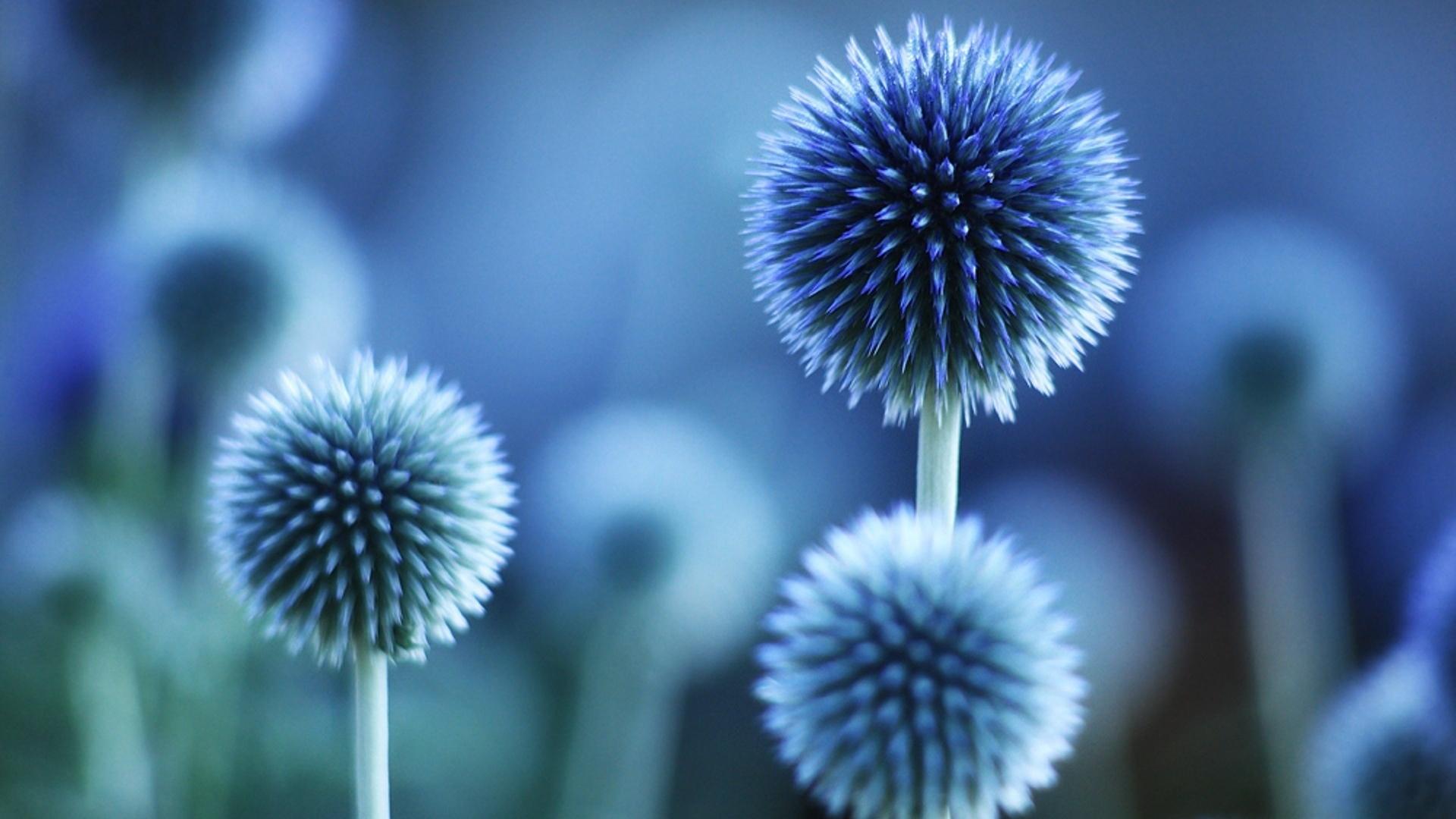 Free Download Amazing Nature Flower Wallpaper Download Wallpaper