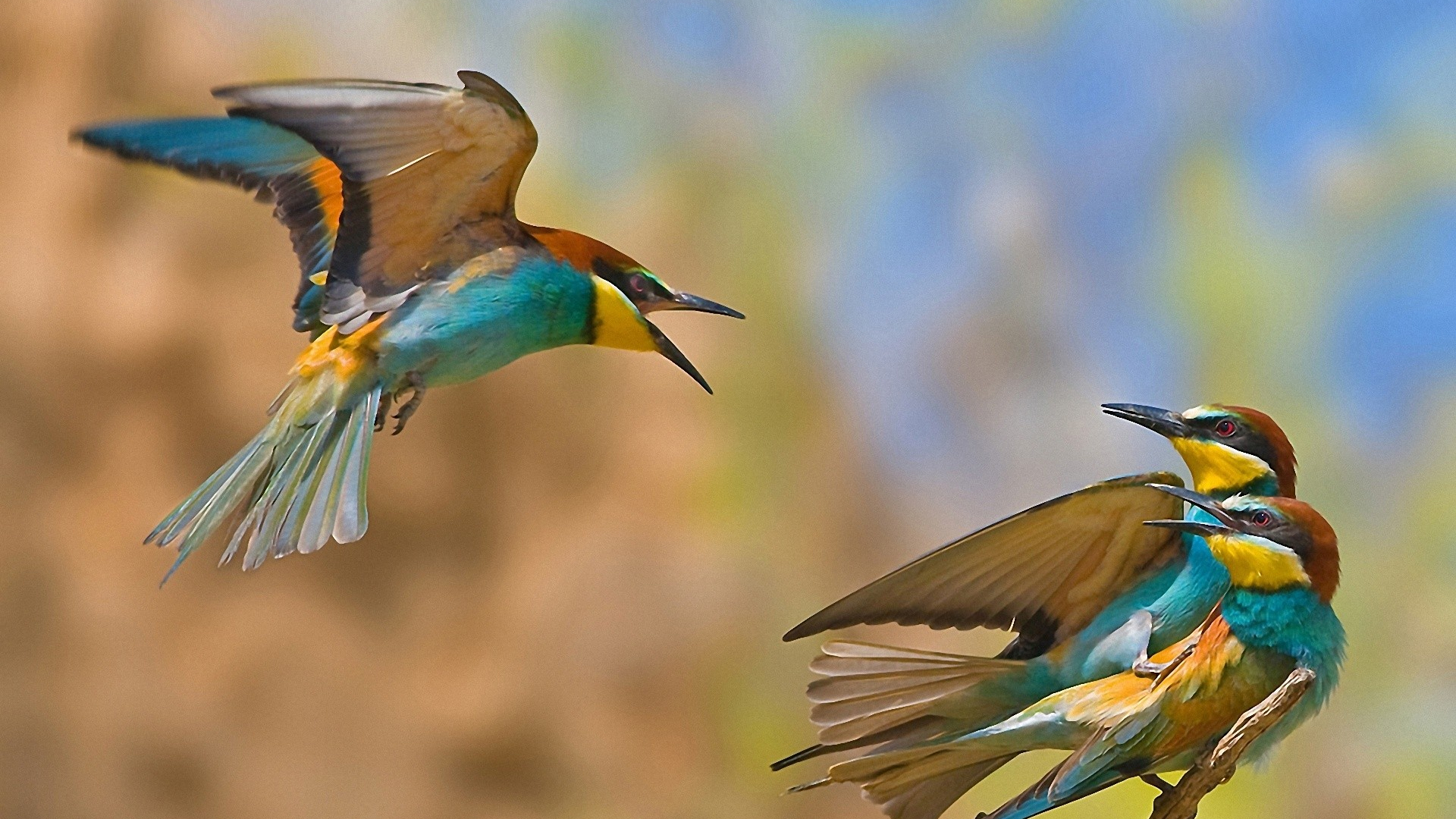 Free Download Birds Wallpaper Download For Mobile Birds Download For 1920x1200 For Your Desktop Mobile Tablet Explore 48 Birds Wallpaper Free Download Parrot Wallpapers Free Download Free Bird Wallpaper