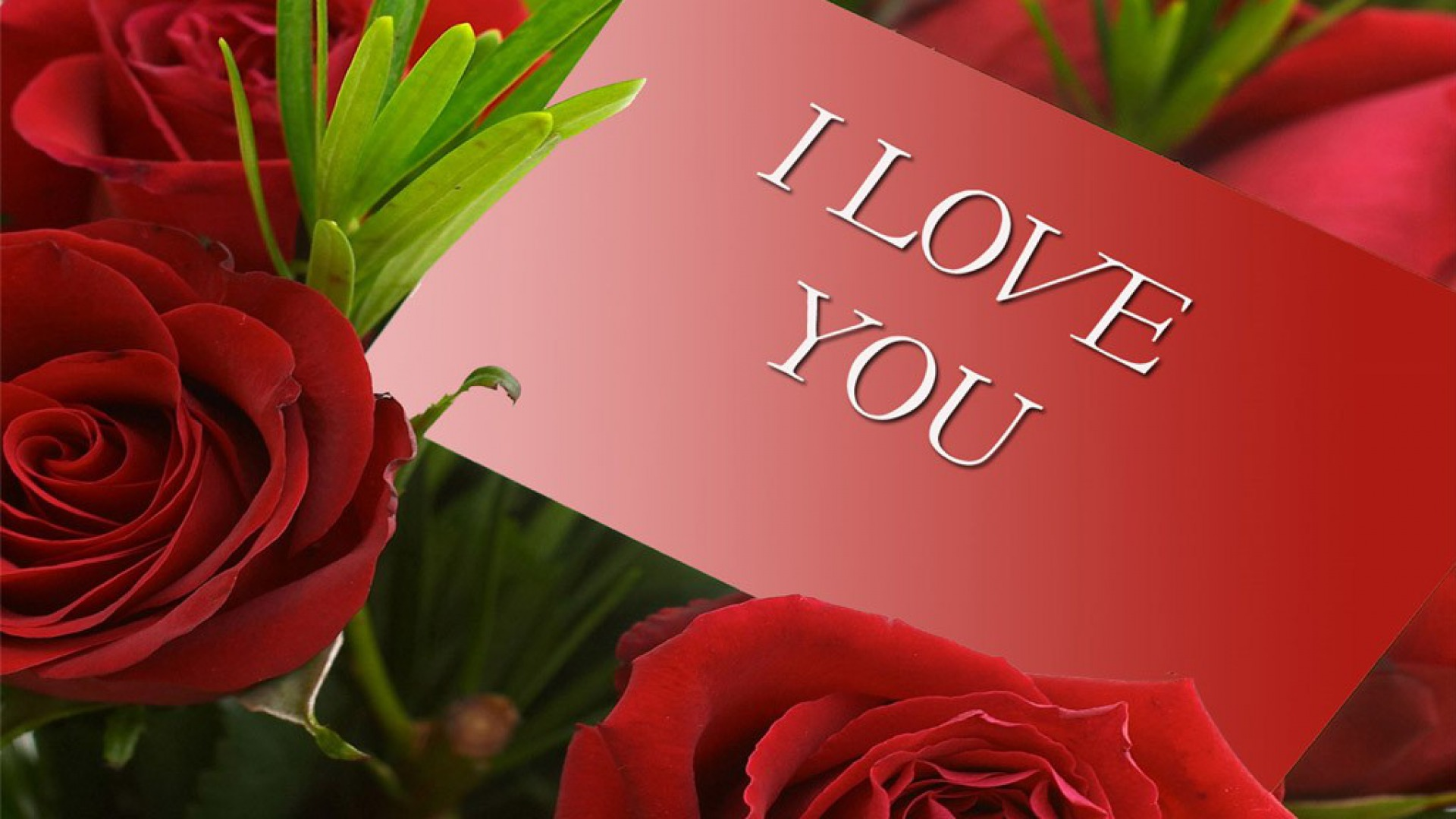 Free Download Hd Wallpaper Valentine I Love You Wallpapers55com