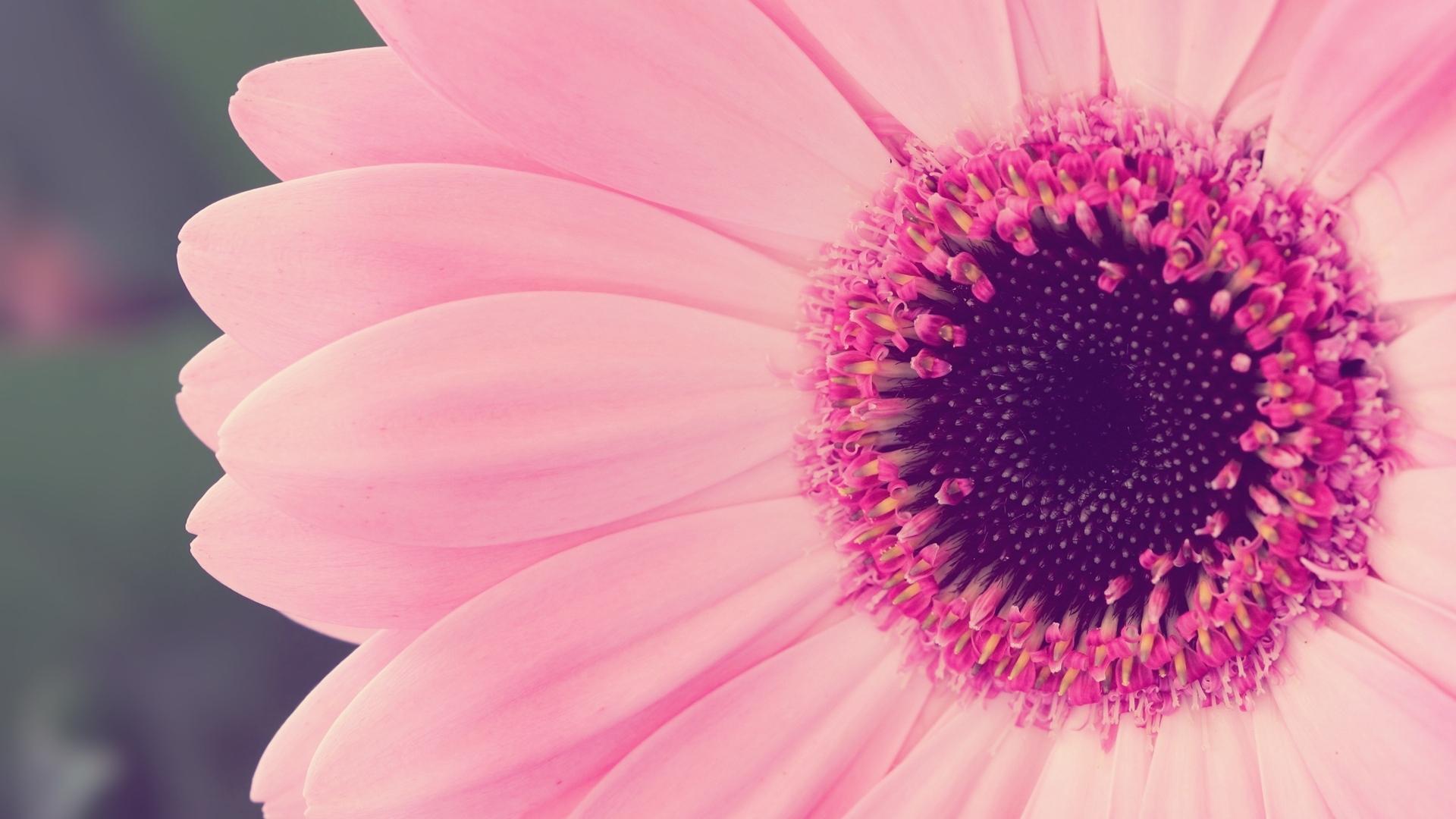 Free Download Pink Flower Desktop Wallpaper Pink Flower Hd