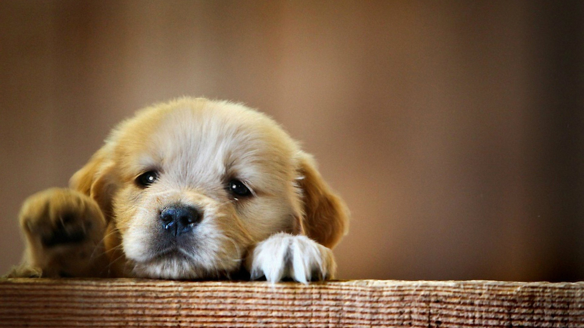 Free Download Cute Baby Dog Desktop Wallpapers Dogs Wallpapers Hd 1920x1200 For Your Desktop Mobile Tablet Explore 72 Cute Puppy Wallpaper Cute Animal Wallpaper Christmas Puppies Wallpaper Puppy Wallpapers