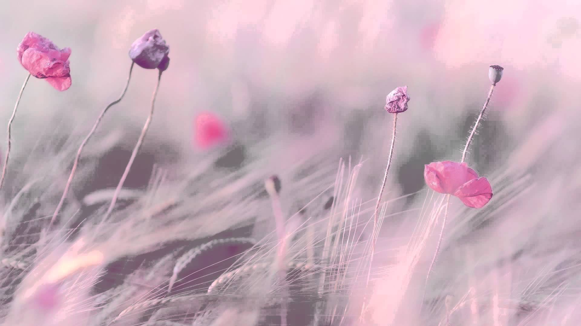 Free Download Hours Best Relaxing Music Romantic Piano 1920x1080 For Your Desktop Mobile Tablet Explore 43 Best Soothing Background Wallpapers Most Beautiful Relaxing Wallpapers Free Soothing Desktop Wallpaper Relaxation Wallpaper