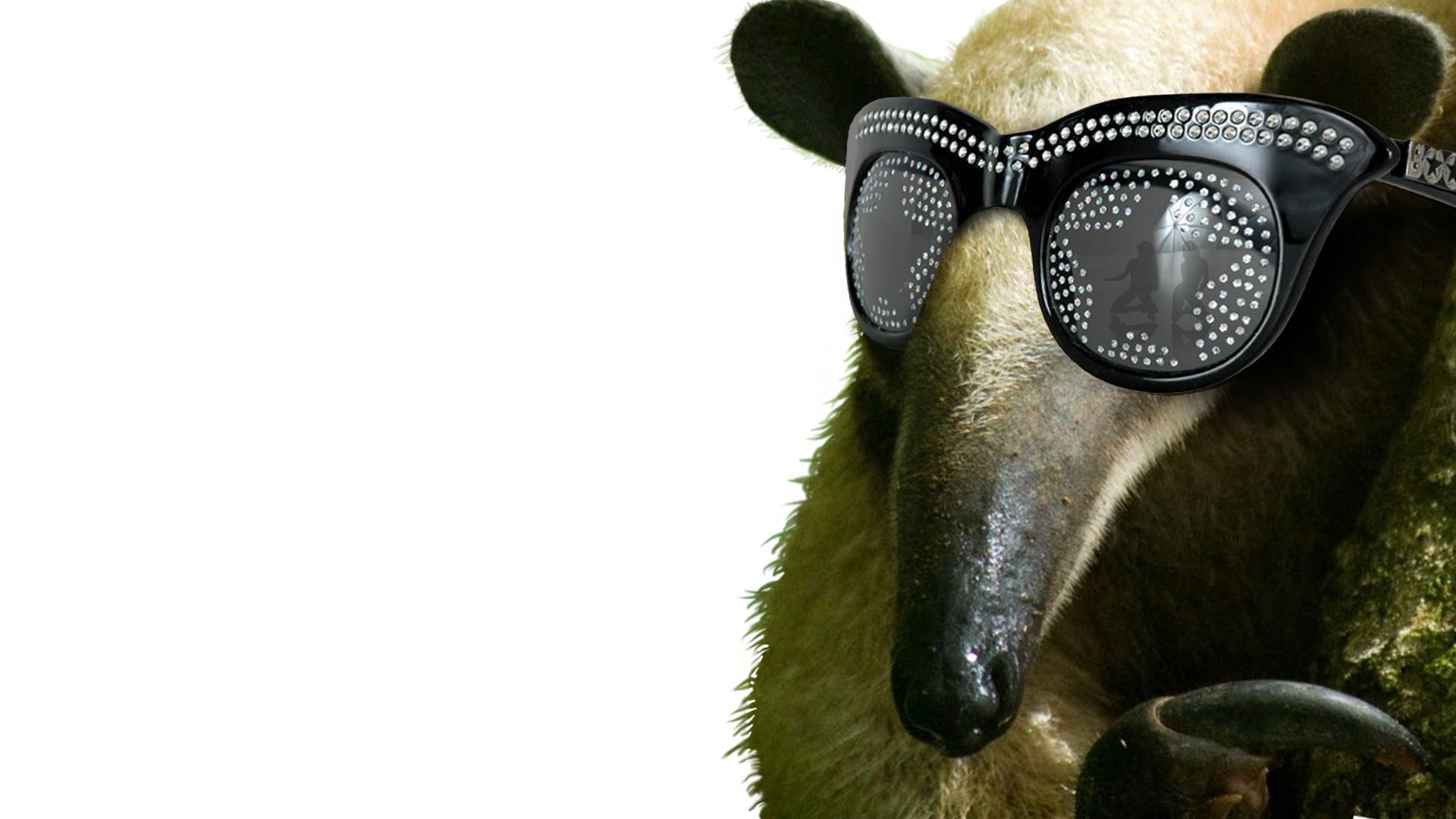 1920x1080px sloth sunglasses wallpaper wallpapersafari