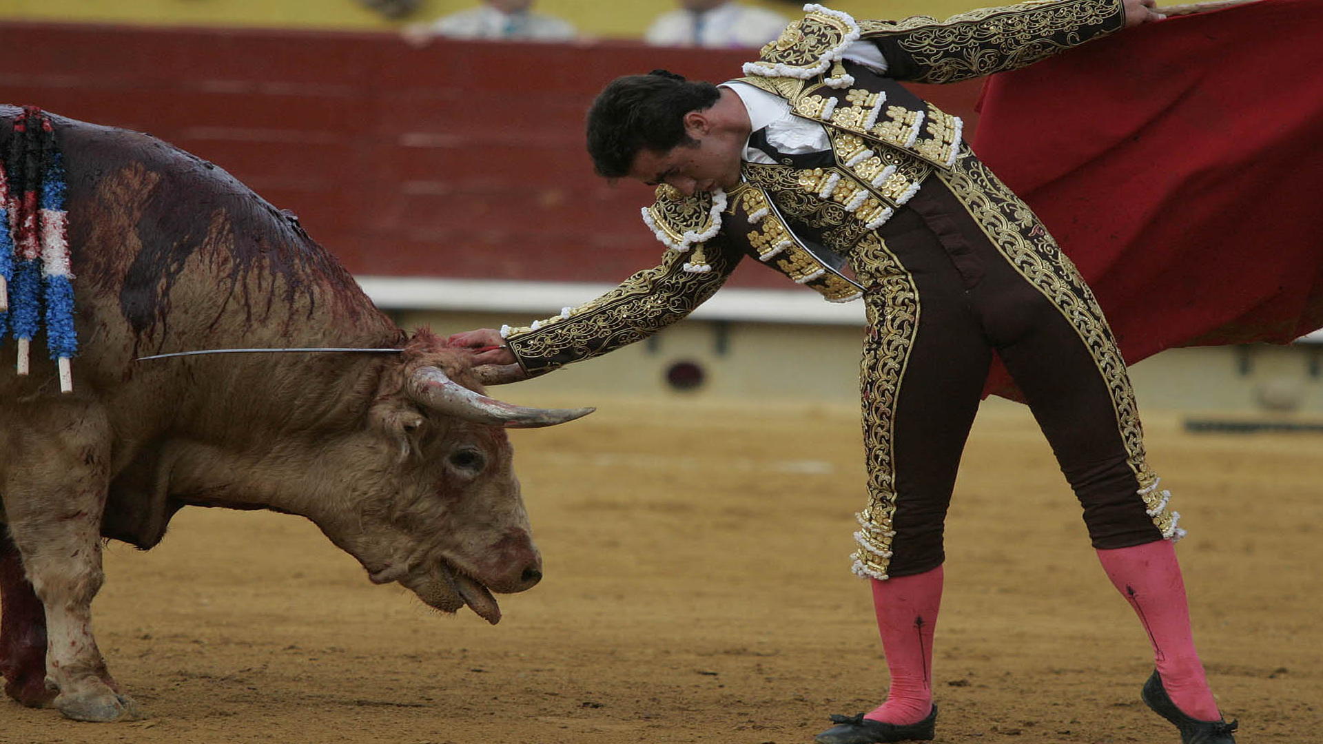 HD Wallpapers and HD Photos Spanish Bullfighting