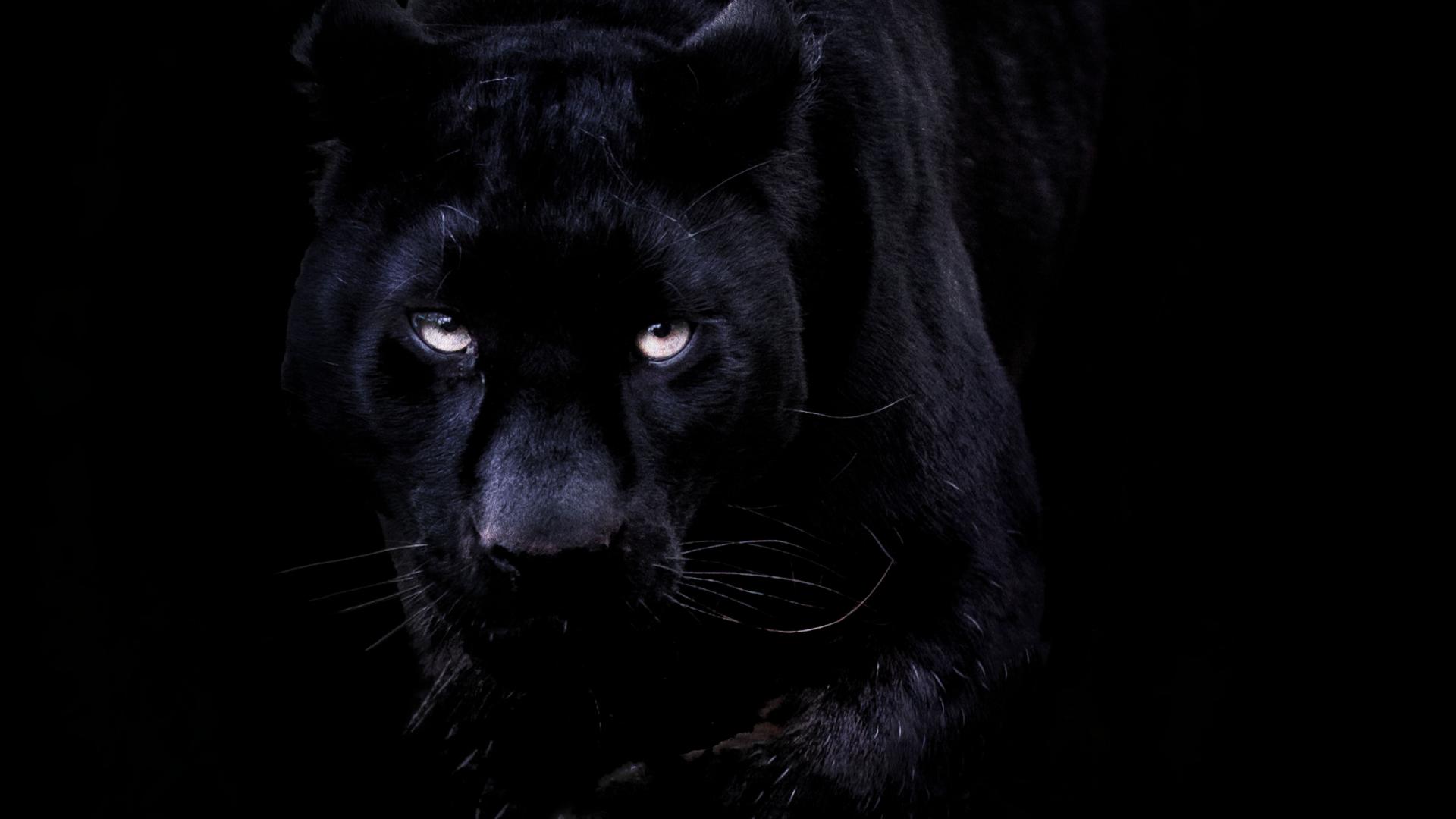 Картинки на рабочий стол пантера черная