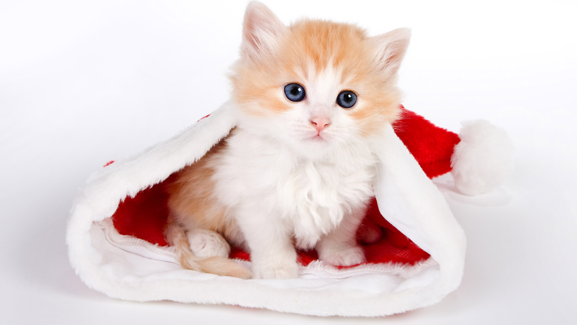 Free Download Cute Cat Wallpapers Cute Cat Desktop Wallpaper Cat Desktop 1920x1200 For Your Desktop Mobile Tablet Explore 74 Cute Kitty Wallpapers Free Kitten Wallpaper Free Kittens Wallpaper For