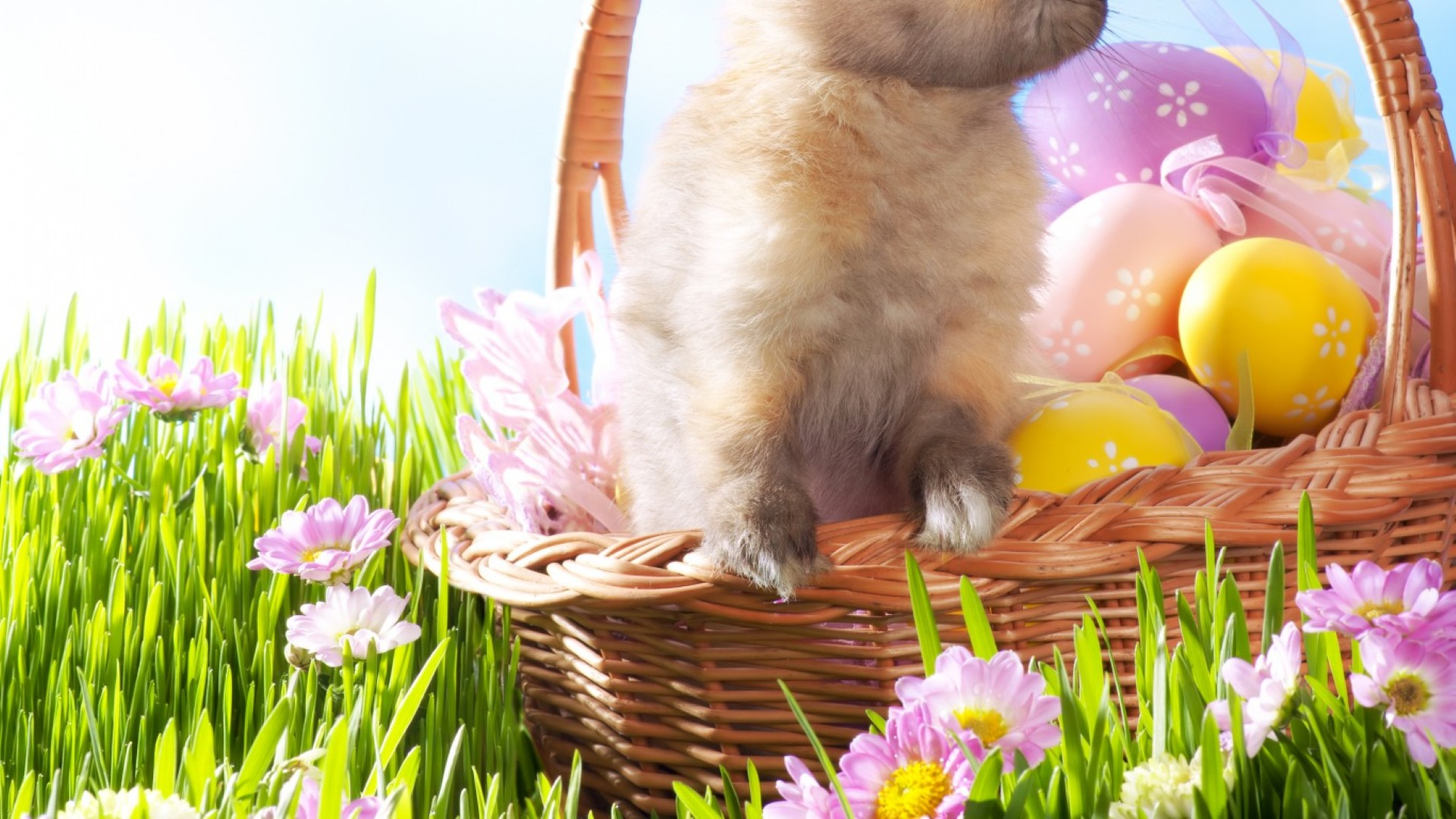 Free Download Easter Wallpaper Hd For Your Desktop 1920x1080 For