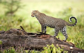wildlife wallpapers hd My HD Animals