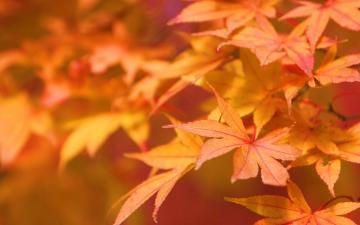 Autumn leaves   Autumn Wallpaper 22177663