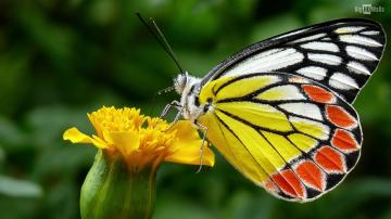 Colorful Butterfly Hd Wallpaper 6 Hd Wallpaper