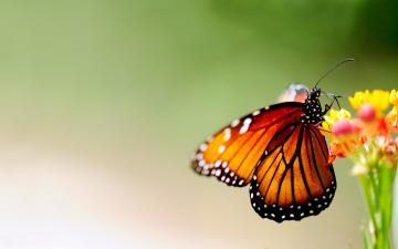 Butterfly On Colorful Flower 1440 x 900 Download Close