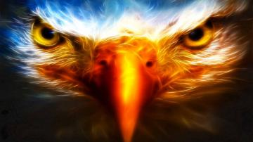 eagle 3d cool hd wallpapers desktop background