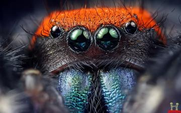 Natural Spider Eyes HD Wallpaper HD Wallpapers Download