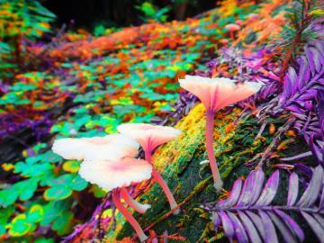 gt Nature gt Flowers amp Plants gt Trippy Desktop Backgrounds Shrooms