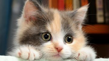 Cute Cats Wallpaper Funny 10560 Wallpaper Cool Walldiskpapercom