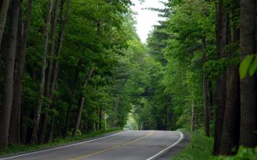 Jungle Road Nature Wallpapers HD Widescreen Full Size