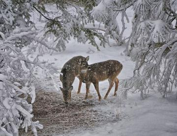 Beautiful Wallpapers deer wallpaper