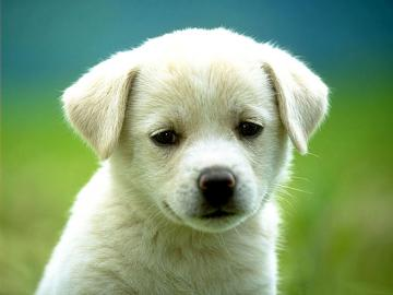 All Wallpapers Beautiful Dog Hd Wallpapers