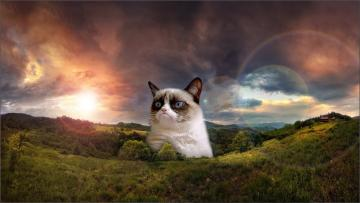 hd wallpaper funny grumpy cat download funny hd wallpapers MEMES