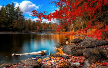 Fall Foliage Wallpapers HD Wallpapers