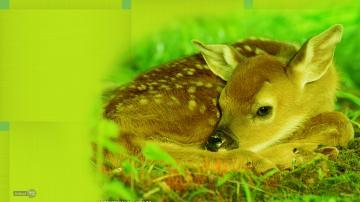 free deer wallpaper mule deer wallpaper wallpaper deer whitetail deer