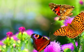 Colorful Butterflies Photo 9   BestePics