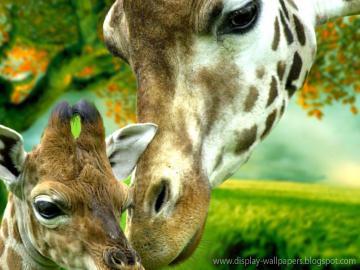 Cute Animals Wallpaper Download Download WallpaperDesktop Wallpaper