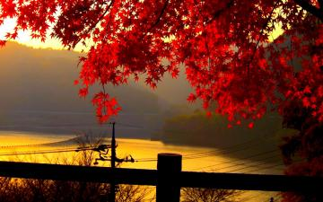Autumn Leaves Wallpaper   Wallpapers