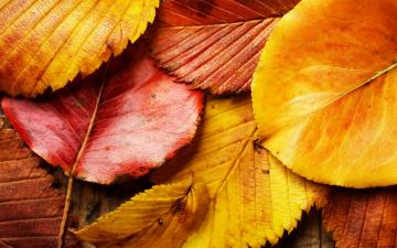 Wallpaper Autumn Leaves Background