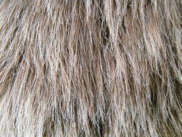 Shag Faux Fur 2 by Rhabwar Troll stock