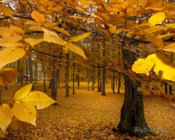 Yellow Leaves   Autumn Wallpaper 393324