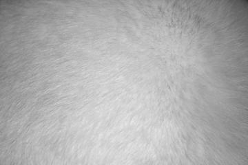 White Fur Texture   High Resolution Photo   Dimensions 3888