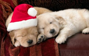 Cute Animal Christmas Wallpaper 10624 Hd Wallpapers in Celebrations