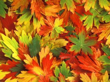 of autumn beautiful leafs autumn leaf scene fresh autumn leafs