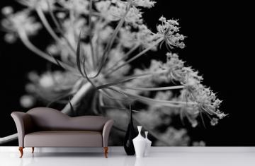 Black and White Dandelions Wall Mural MuralsWallpapercouk