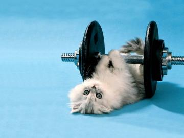 All Wallpapers Funny Cats Hd Wallpapers