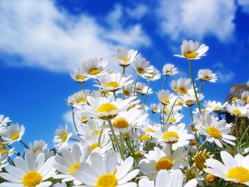 spring wallpaper widescreen