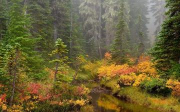 HQ Brook Mount Rainier National Park Wallpaper   HQ