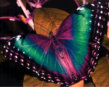 Beautiful Colorful Butterfly Pictures 15 Hd Wallpaper Wallpaper