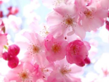 Pretty Flower Backgrounds   HD Wallpapers