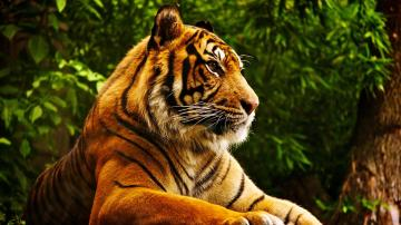 Tiger Computer Wallpapers Desktop Backgrounds 3840x2160 ID441761